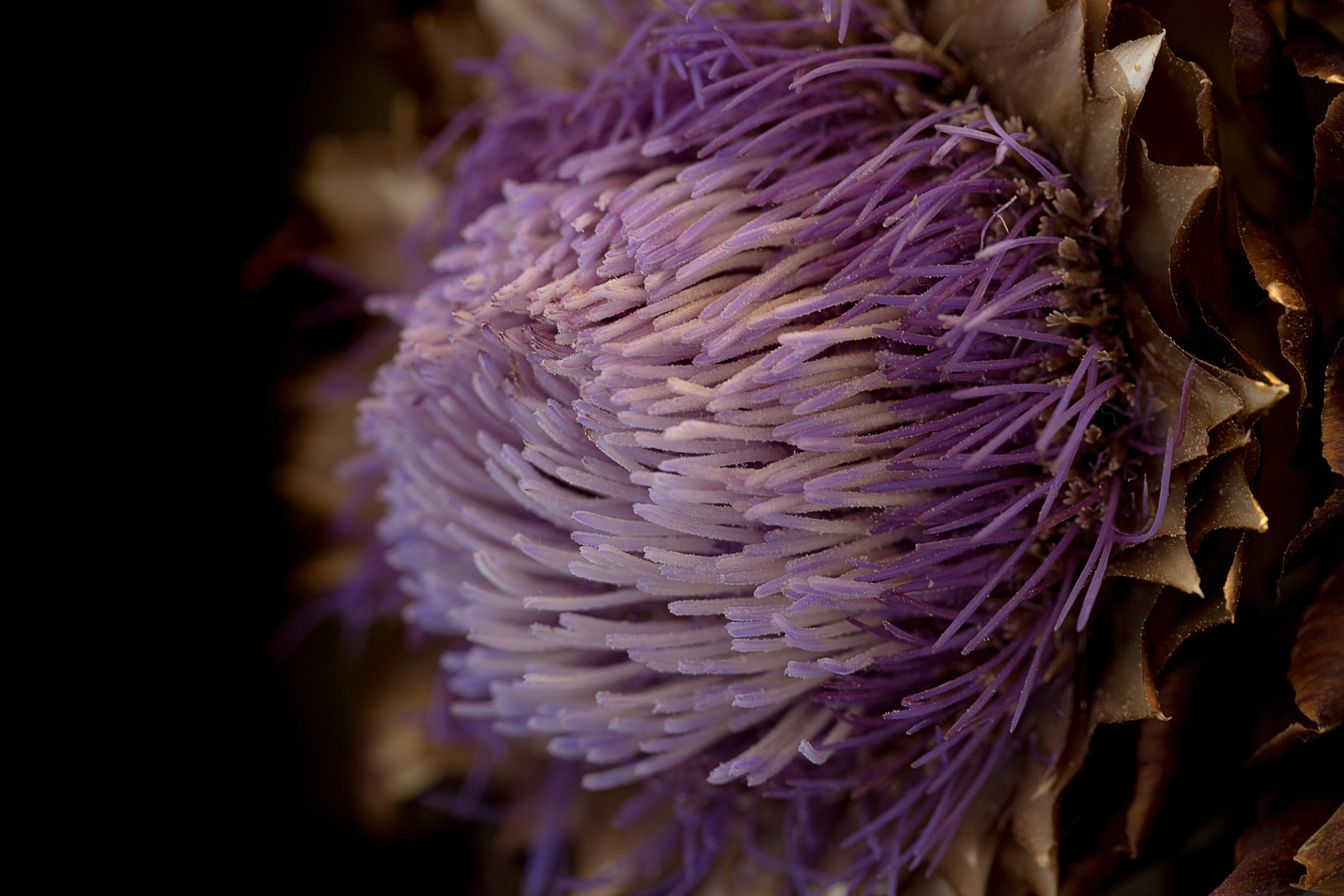 Detailaufnahme einer Artischockenblüte.