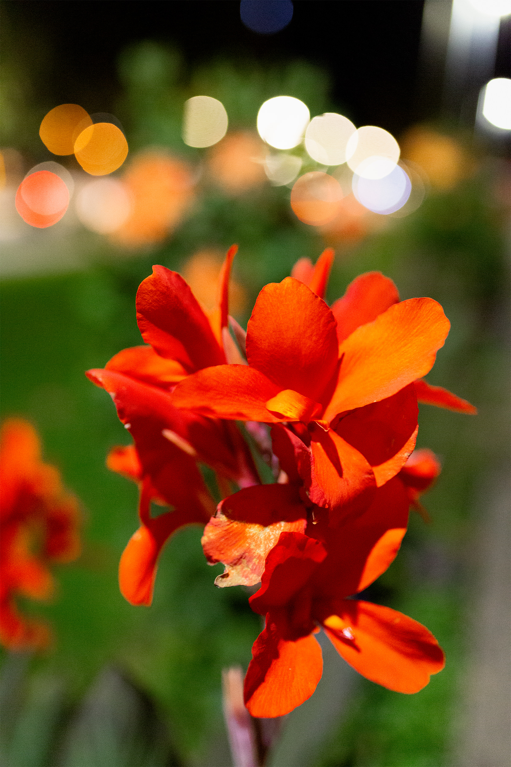 Große, rote Blüte.