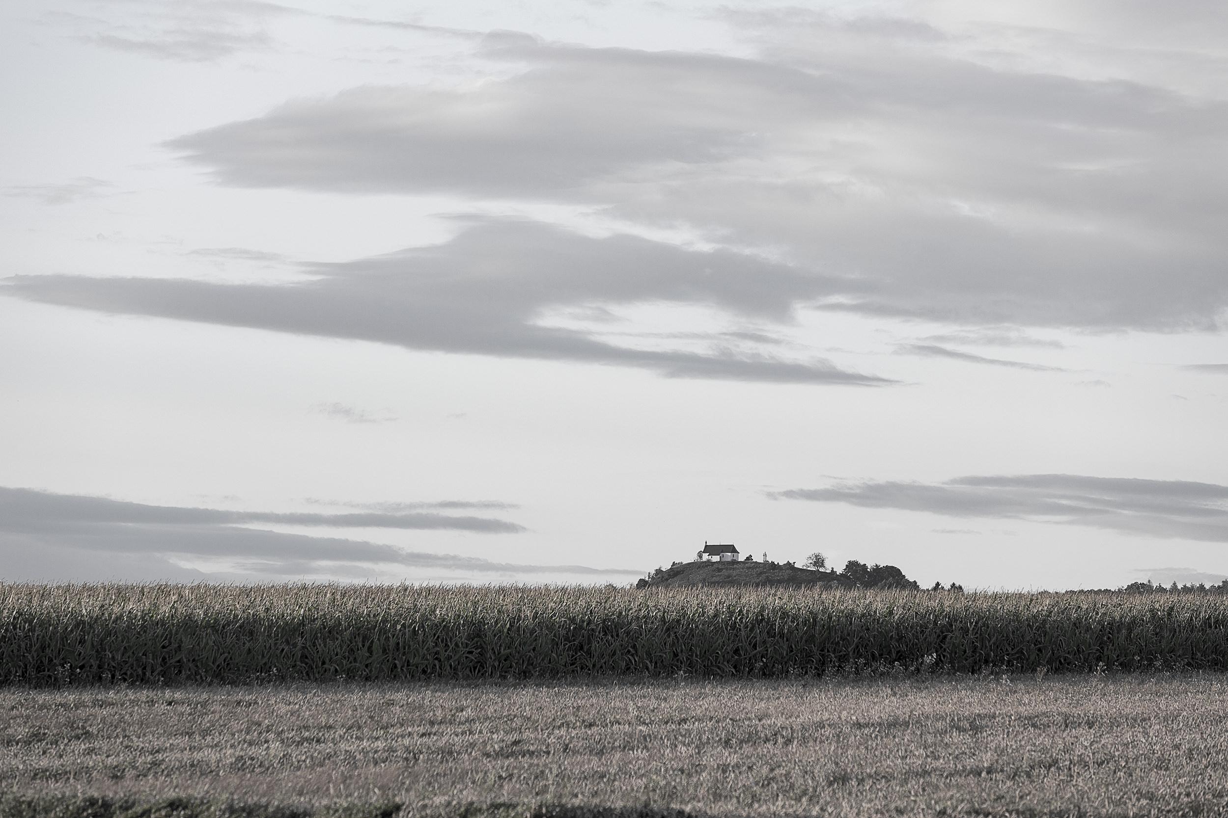 Der Kornbühl hinter einem Maisfeld.