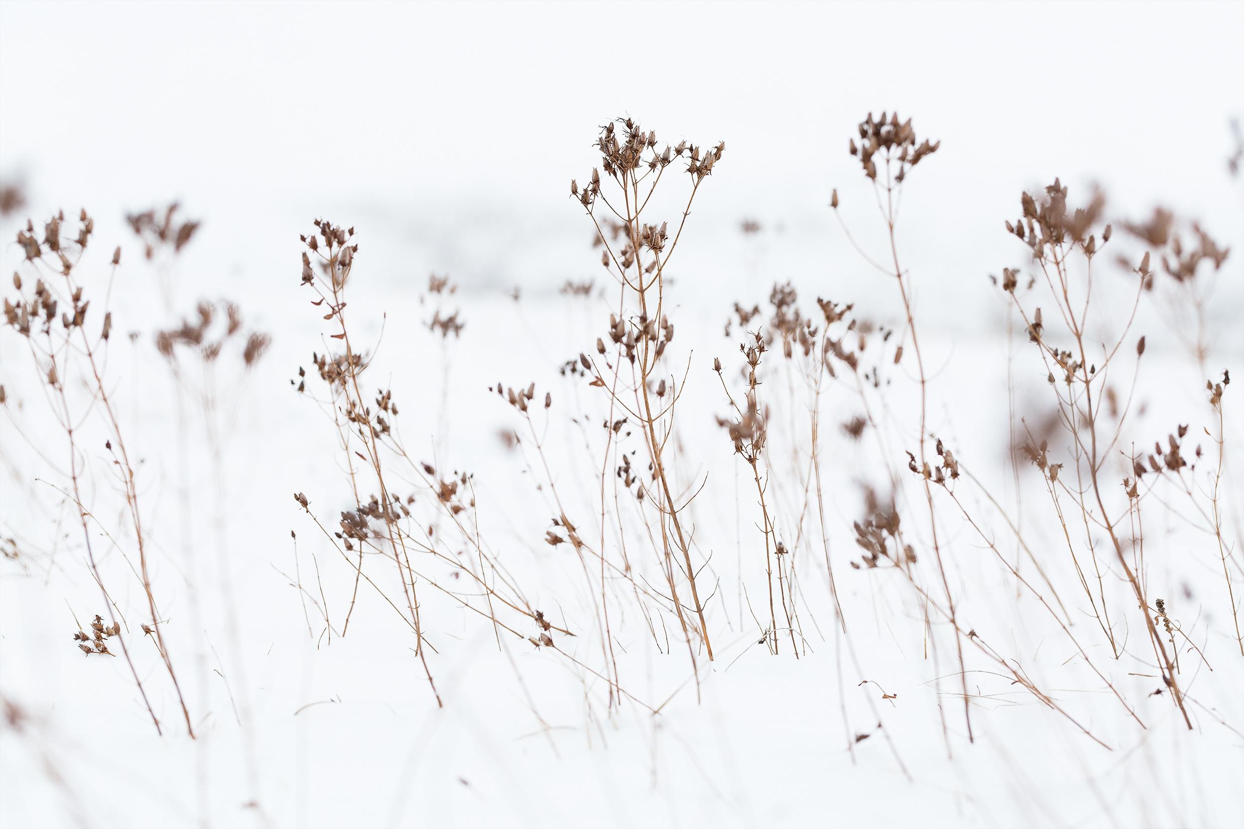 Winterszene beim Golfplatz nahe Sonnen-Undingen.
