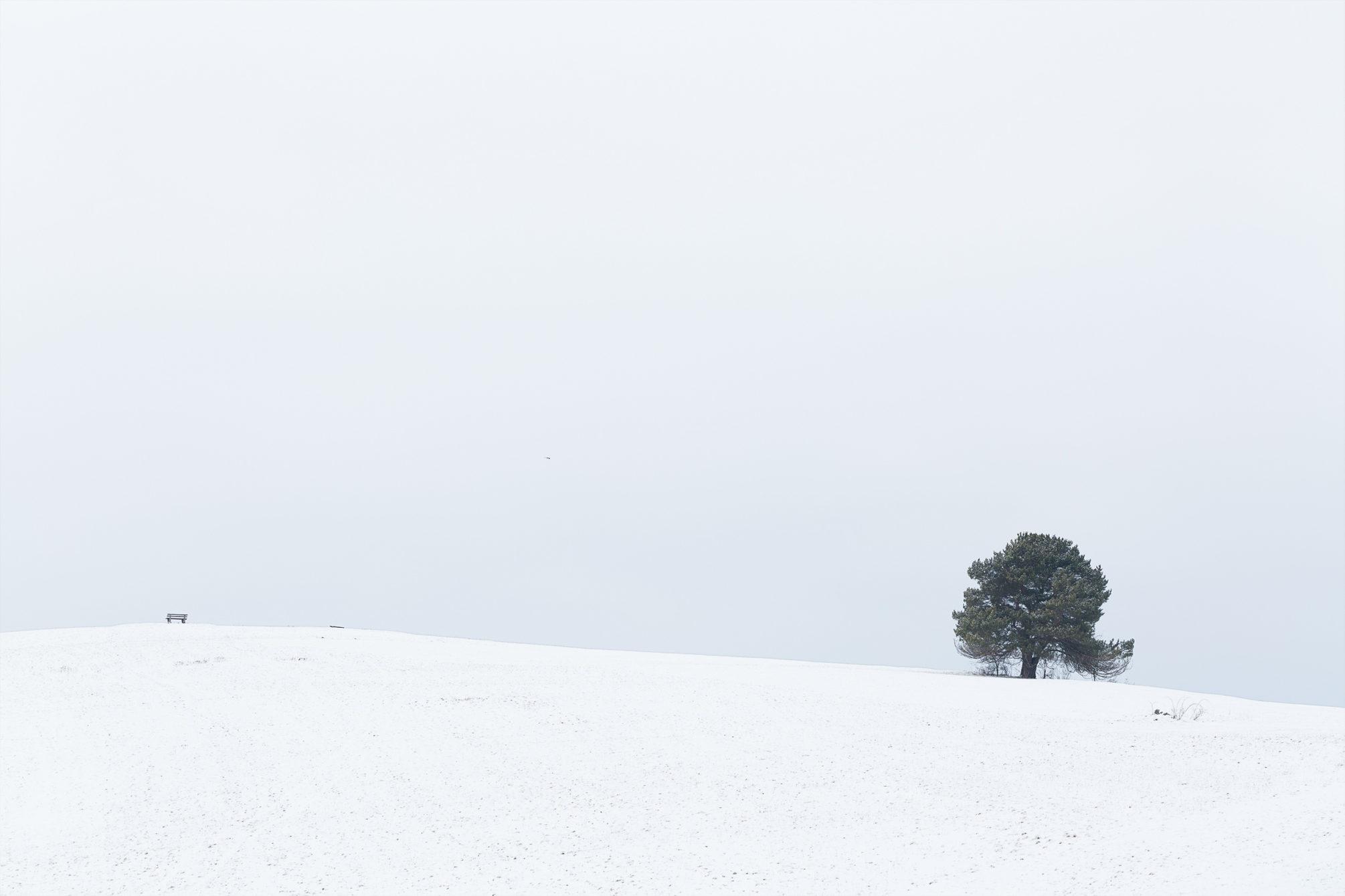 Ein einzelner Baum auf nahe dem Golfplatz Undingen im Winter.