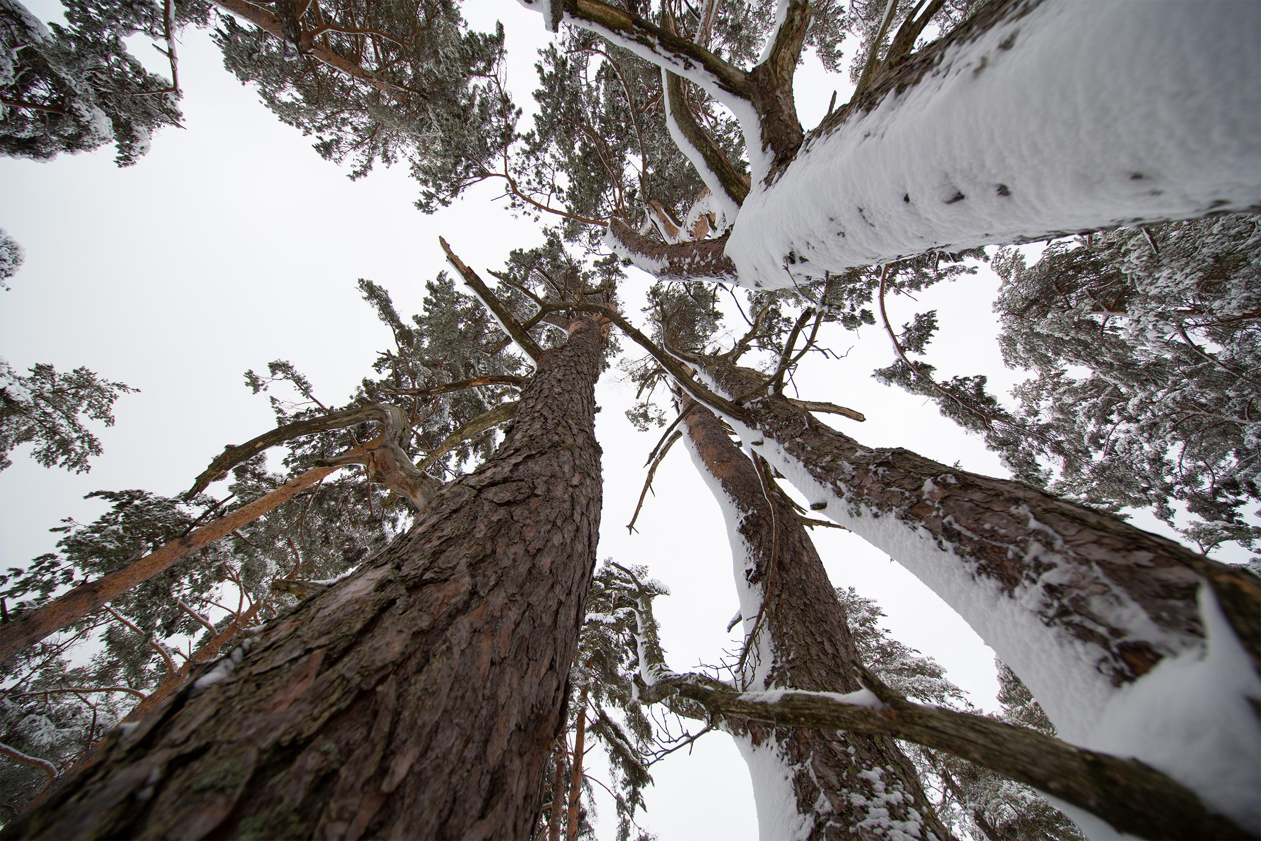 Winterliche Bäume auf der Zollern-Alb.