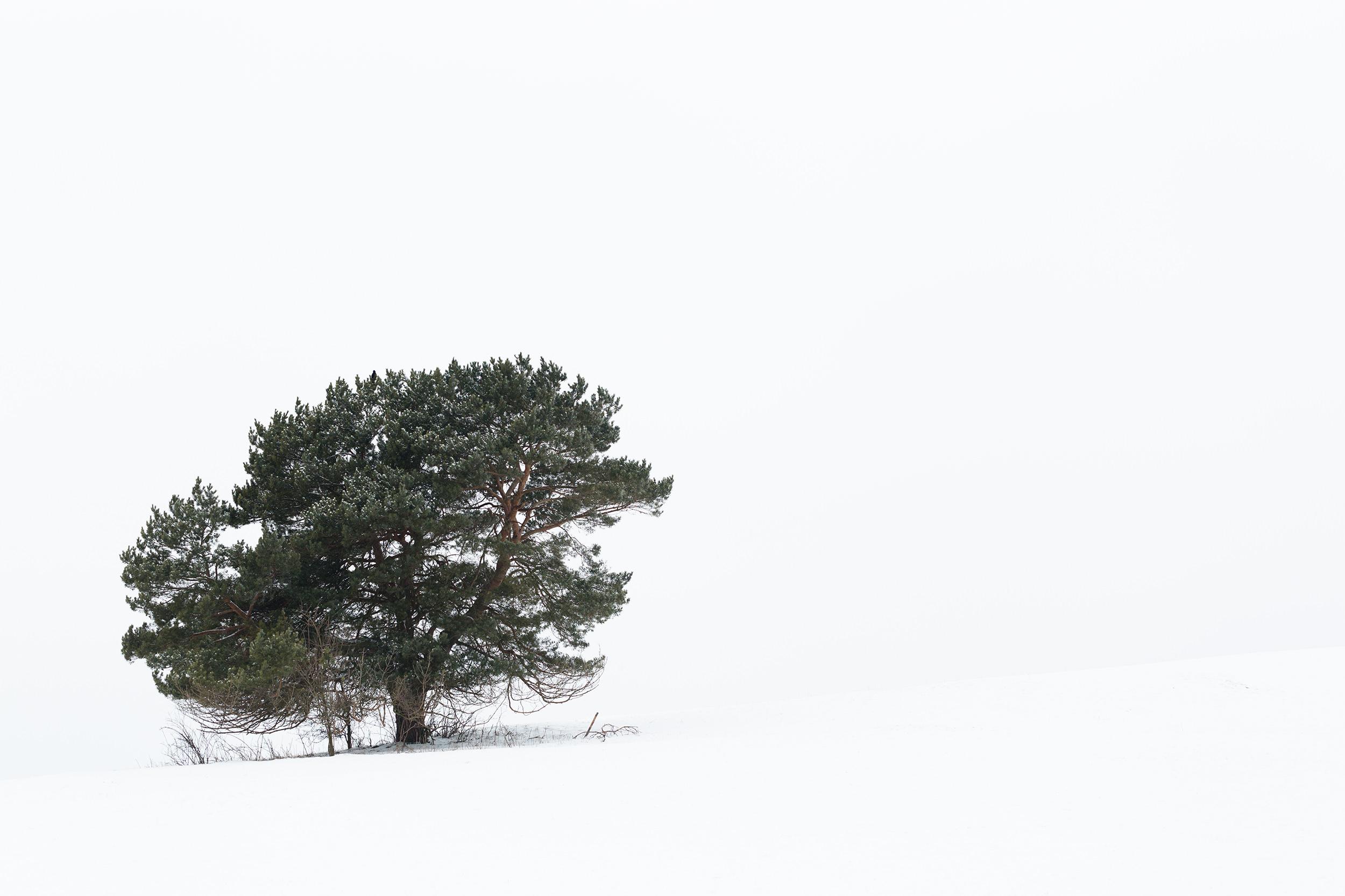 Verschneiter Baum auf einer verschneiten Wiese.