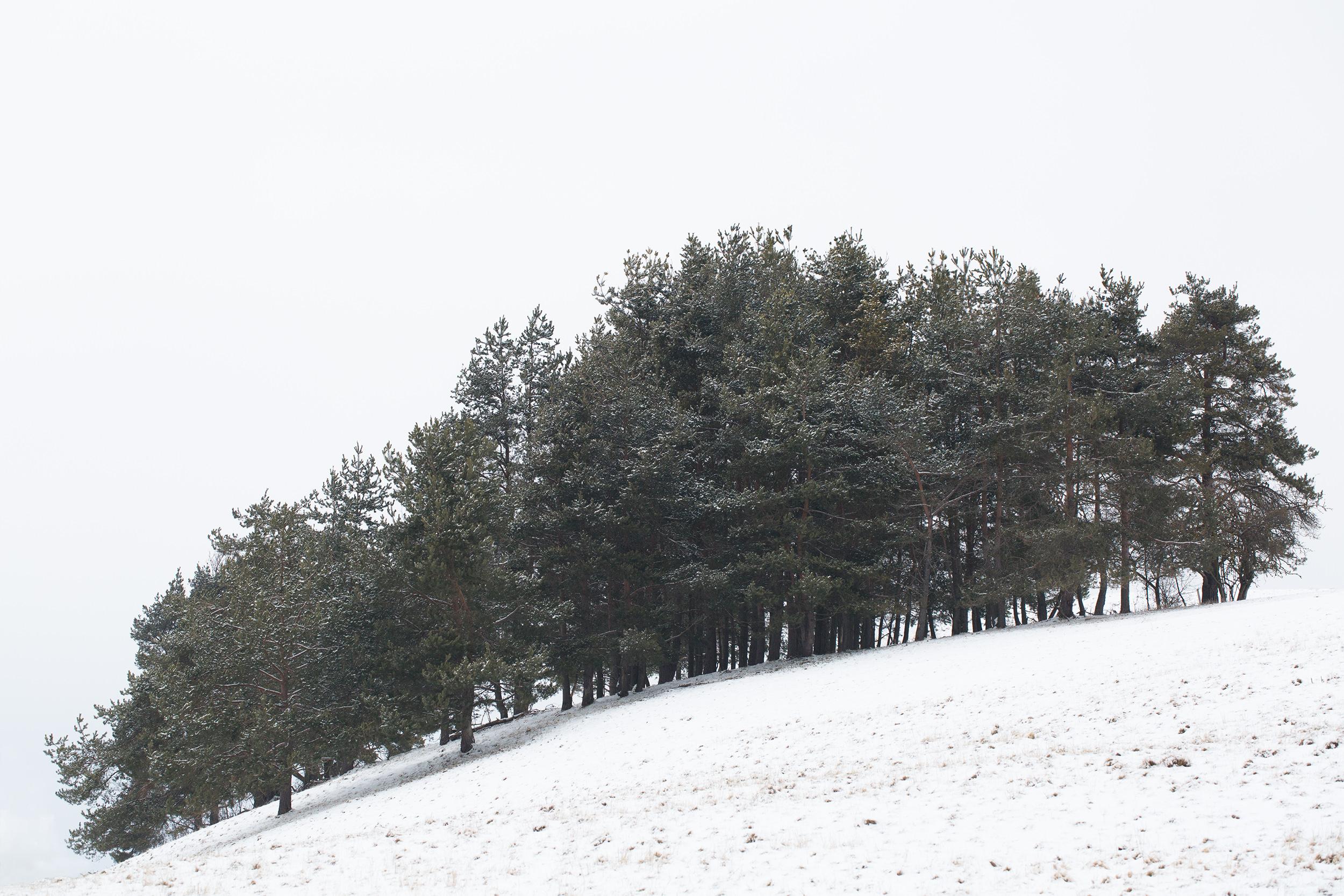 Kleines Wäldchen im Schnee bei Sonnenbühl.