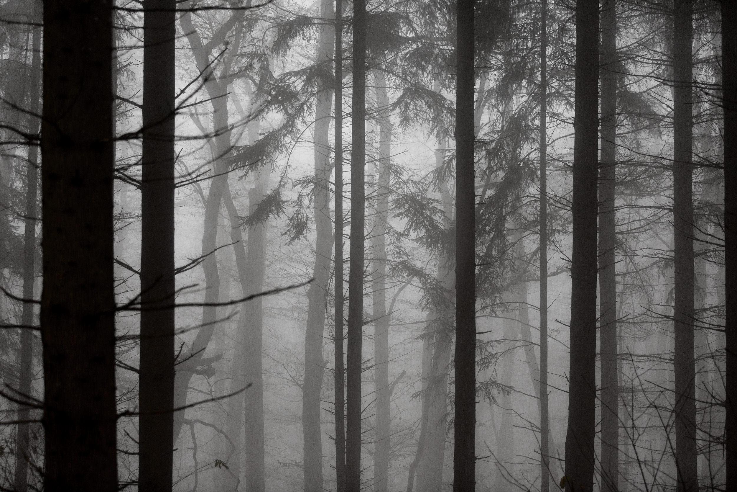 Bäume im dichten Nebel nahe der Salmendinger Kapelle.