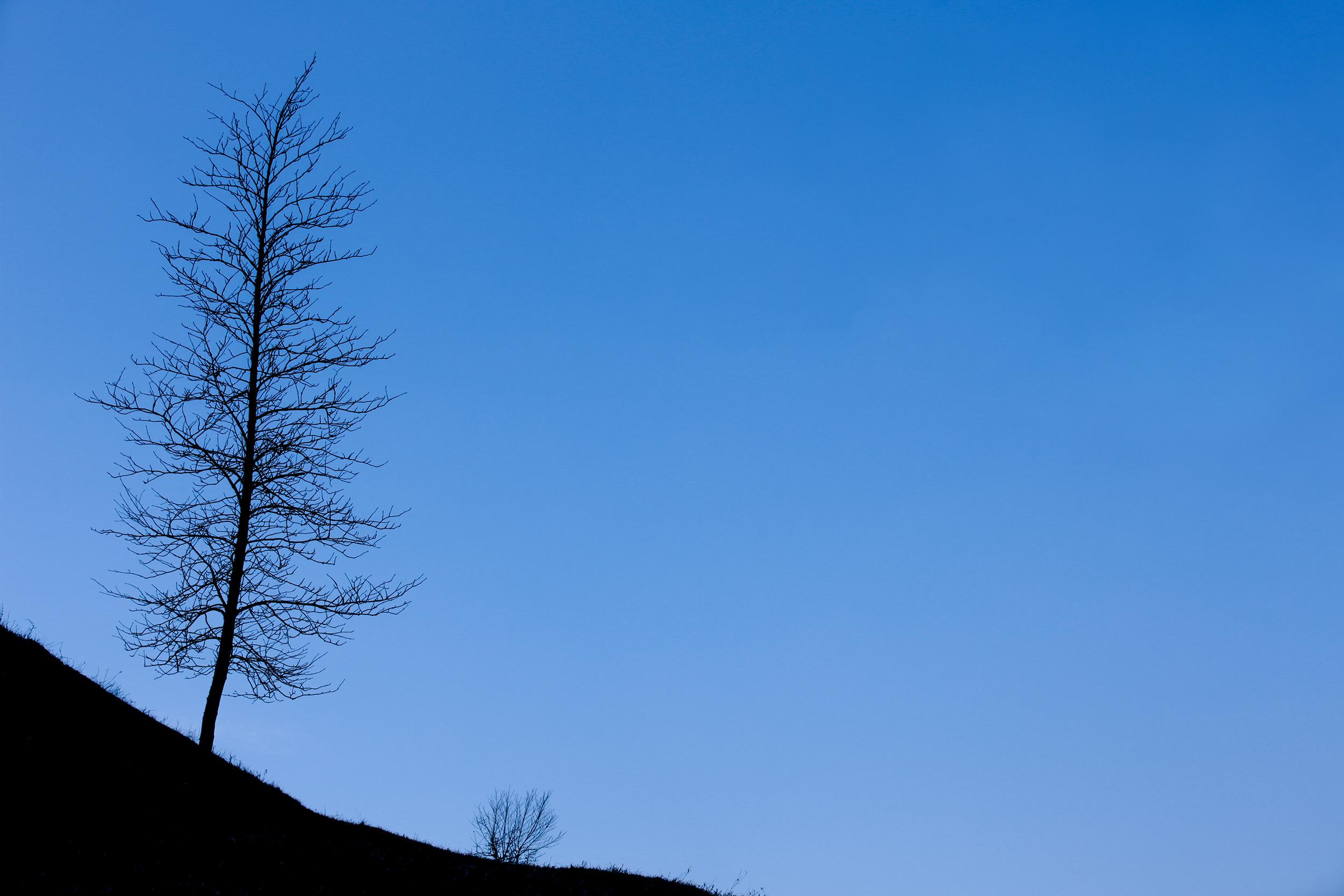 Reliefaufnahme eines Baumes.