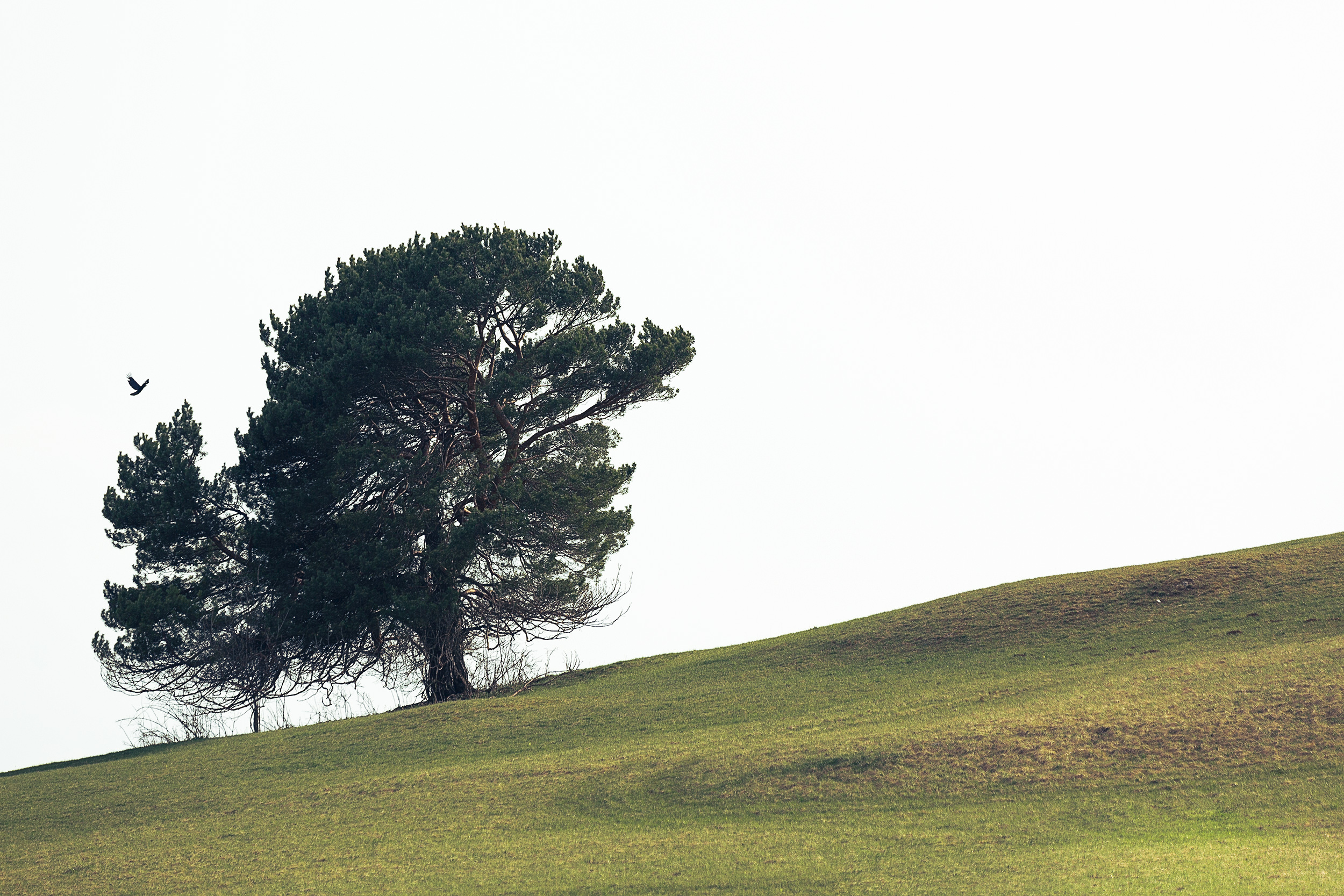 Baum auf einer Wiese.