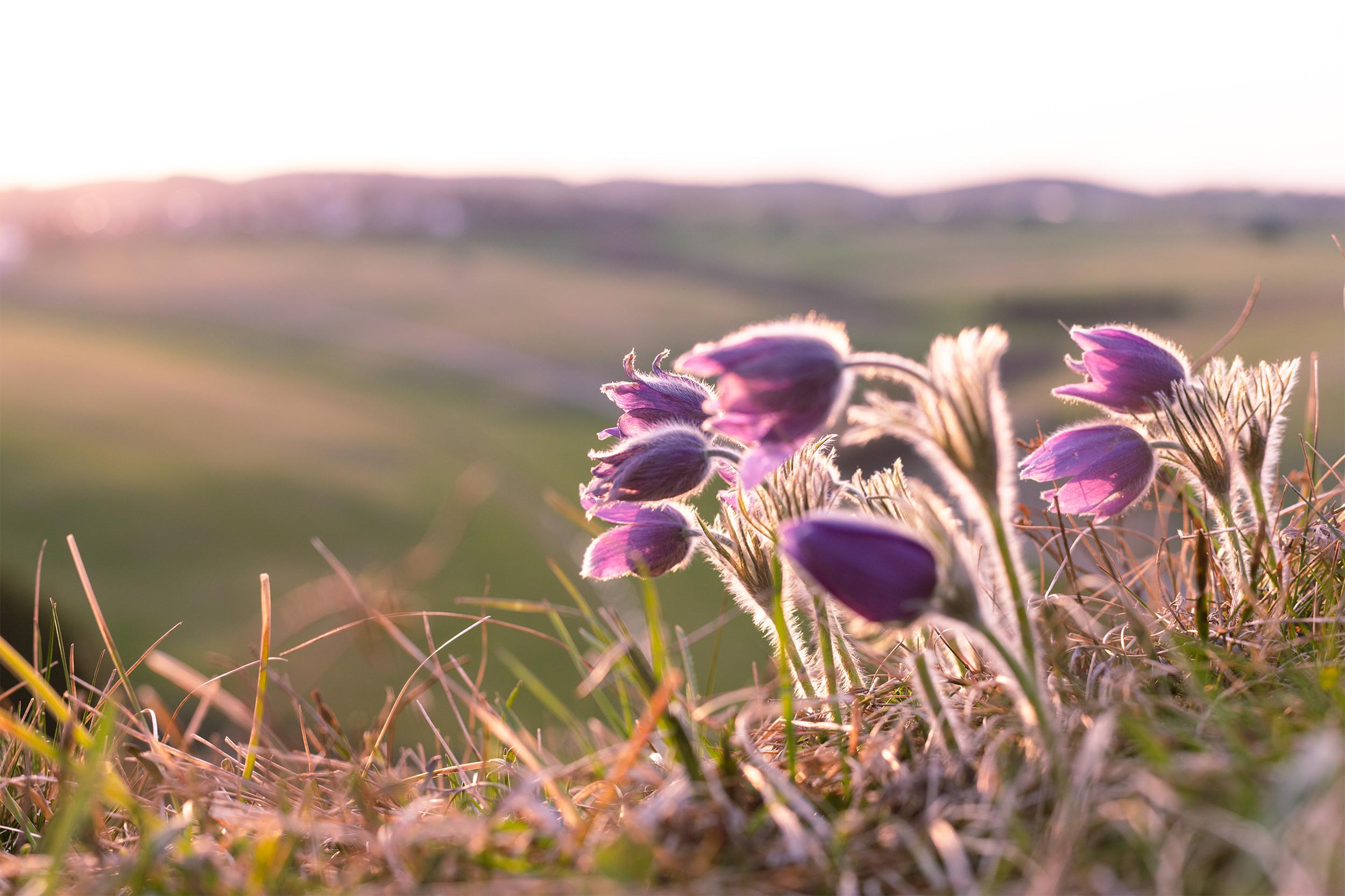 Wiesenblumen im Abendlicht.
