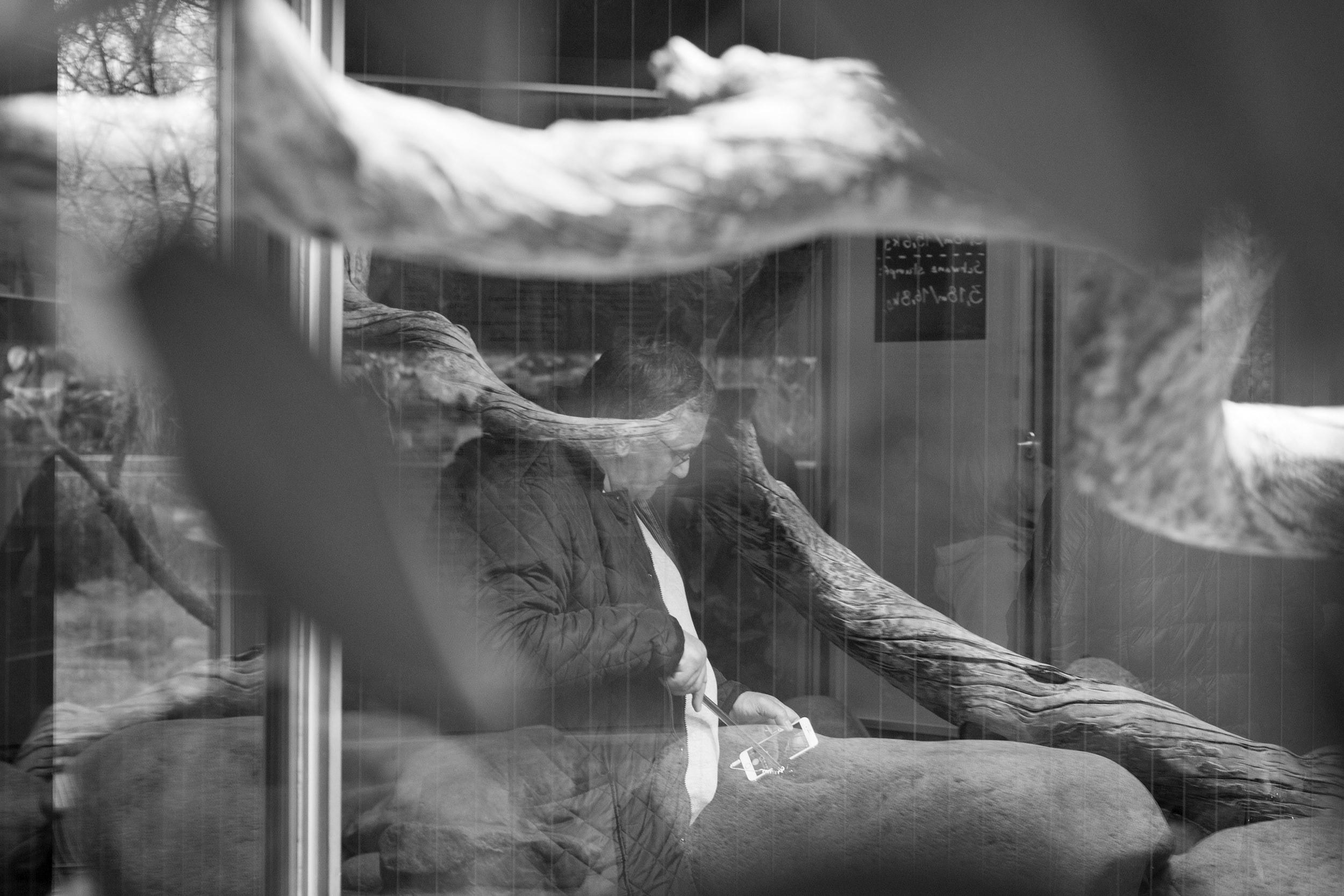 Reflexionen im Fenster eines Terrariums, welchen einen Mann teilweise verdecken.