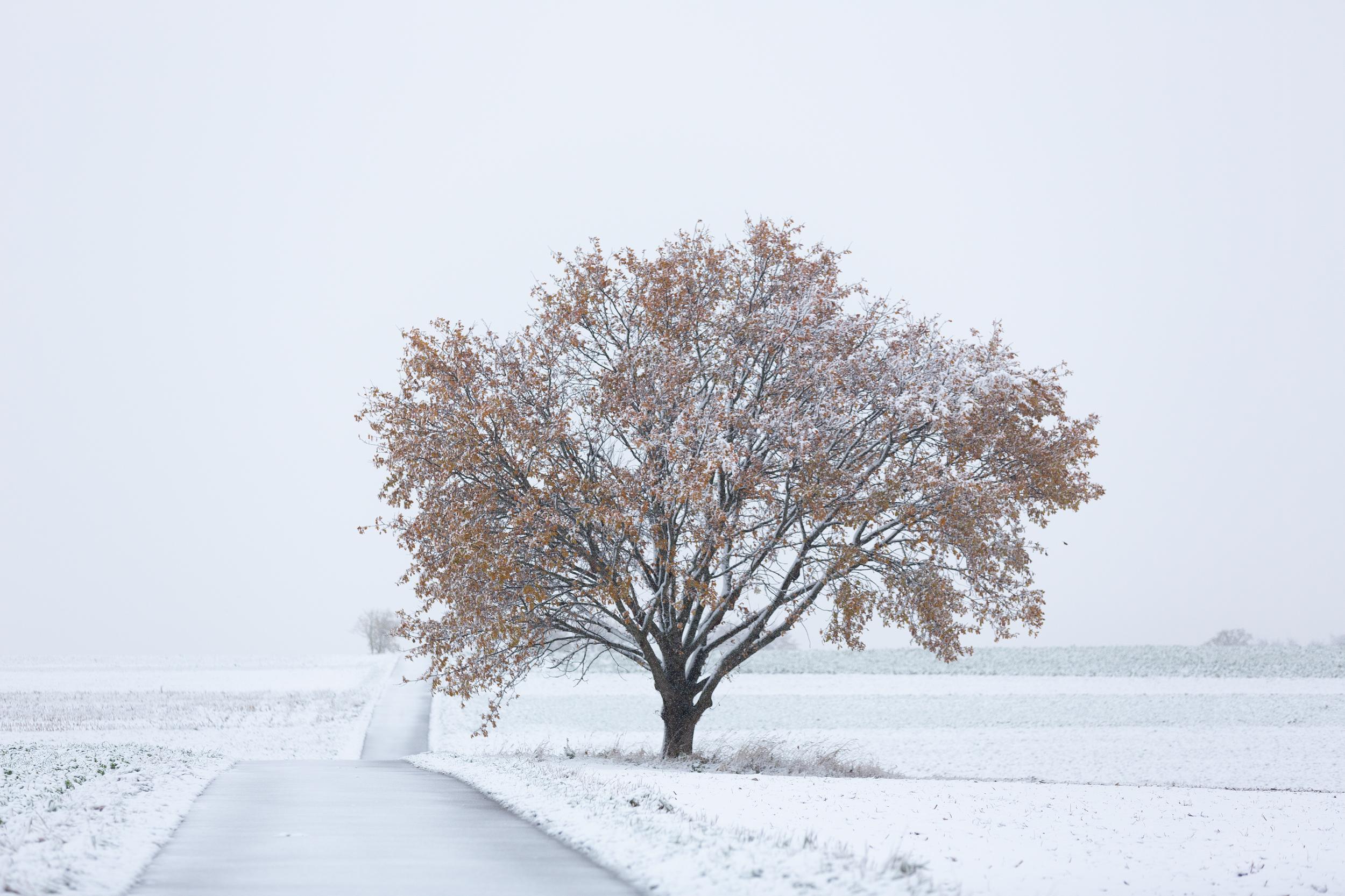 Noch mit Laub bedeckter Baum im ersten Schnee 2019