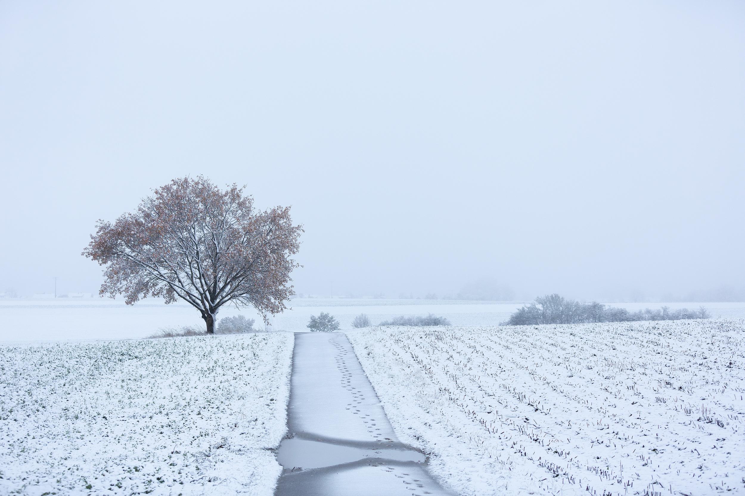 Verschneite Albhochfläche im ersten Schnee 2019