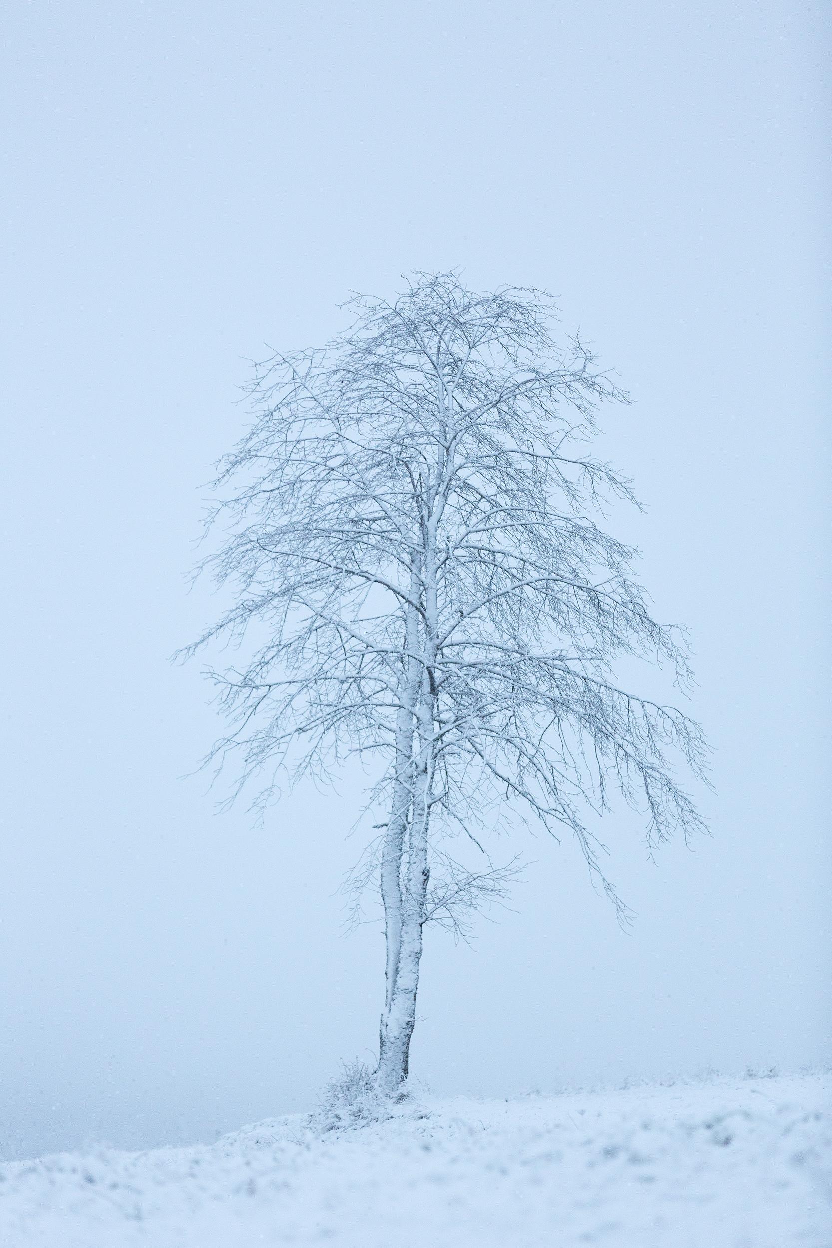 Einzelner, verschneiter Baum auf der Schwäbischen Alb