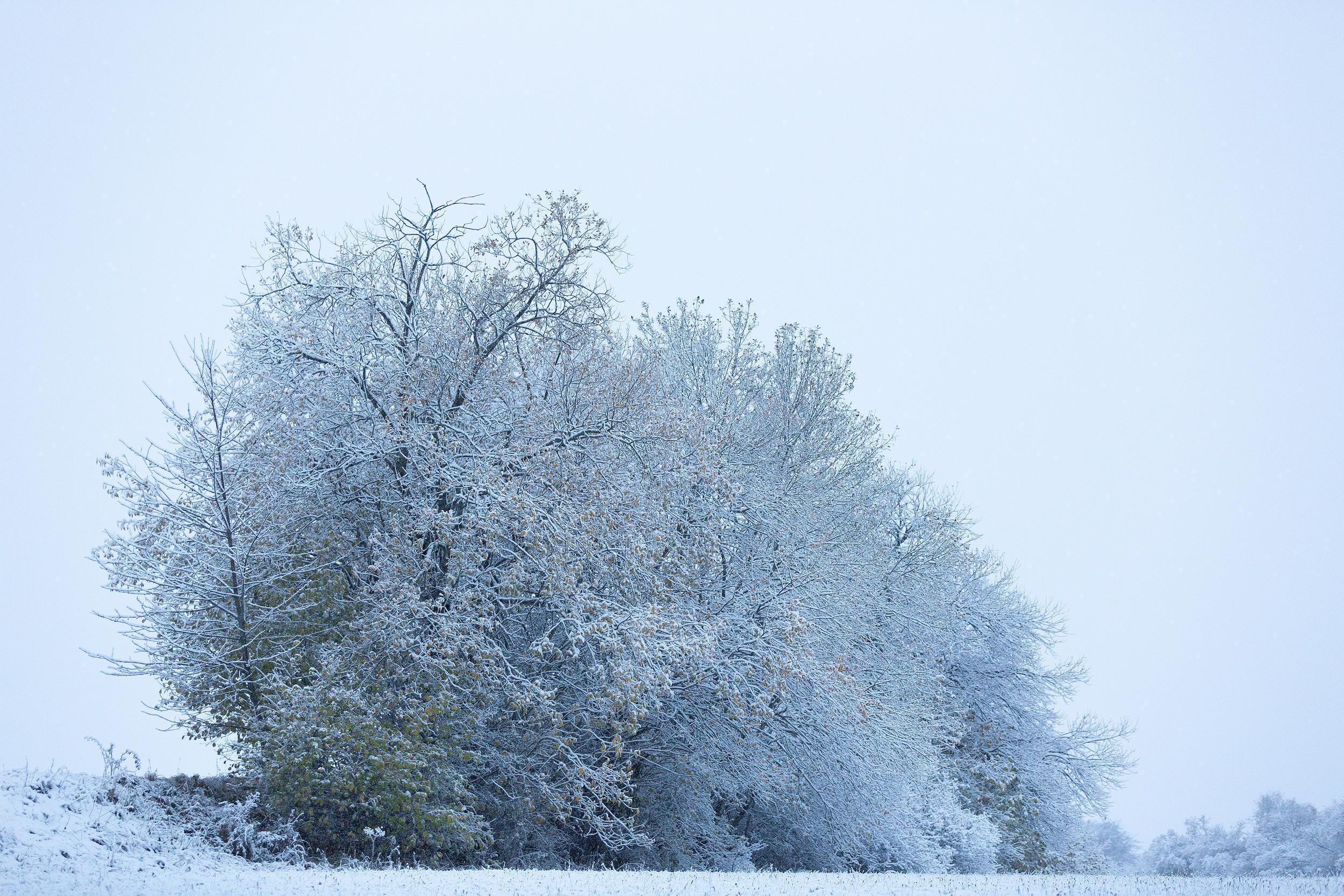 Leicht verschneite Büsche auf der Alb